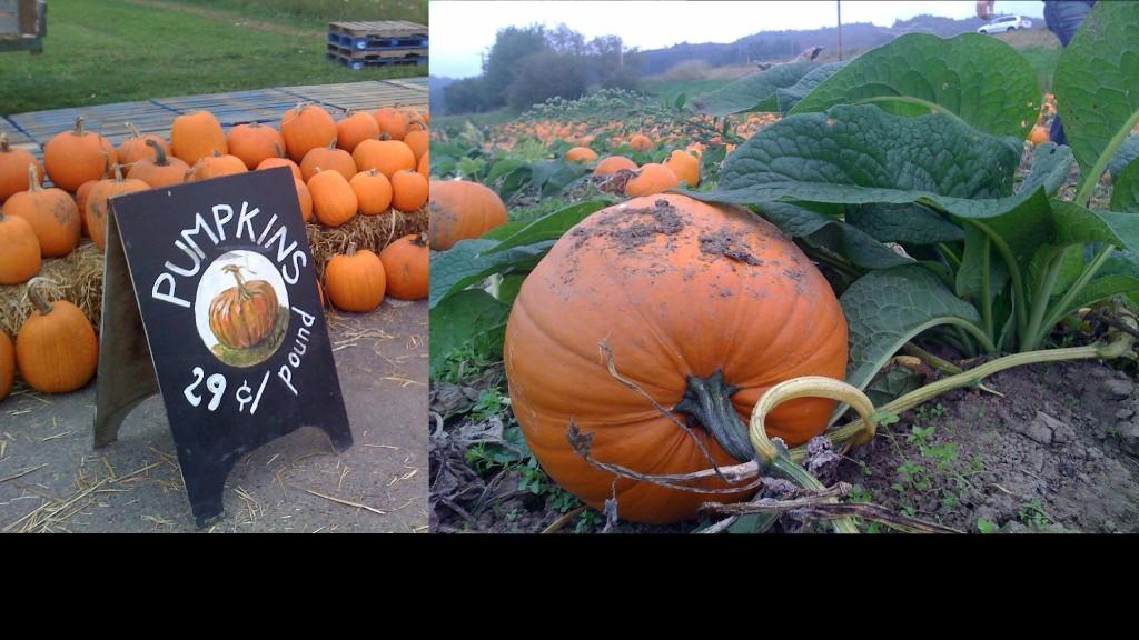 pumpkinheaderyou