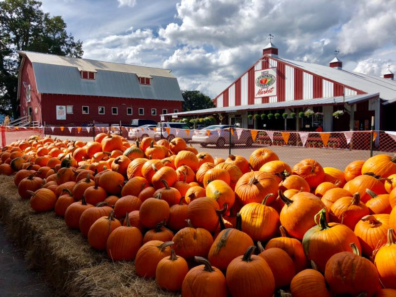 The-Pumpkin-Patch-Sauvie-Island