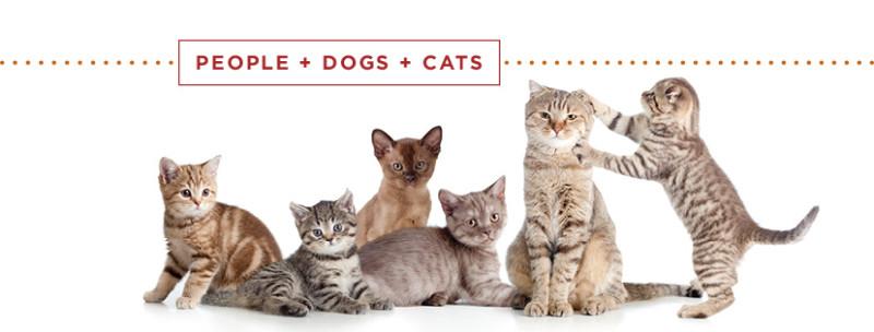 kitten-adoption-showcase